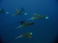© copyright by Scuba-Diving-Fiji.com