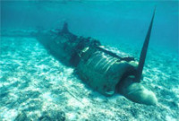 © copyright by Fish ´n Fins
