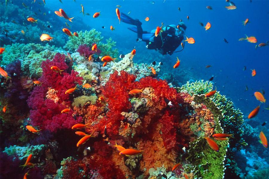 Scuba Diver - padicom